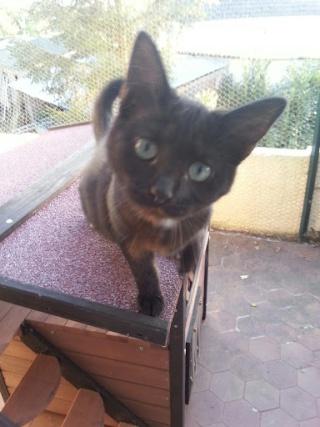 PRUNELLE - 6 mois - Femelle noir & plastron + bout des pattes blanc 20120983