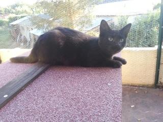 PRUNELLE - 6 mois - Femelle noir & plastron + bout des pattes blanc 20120984