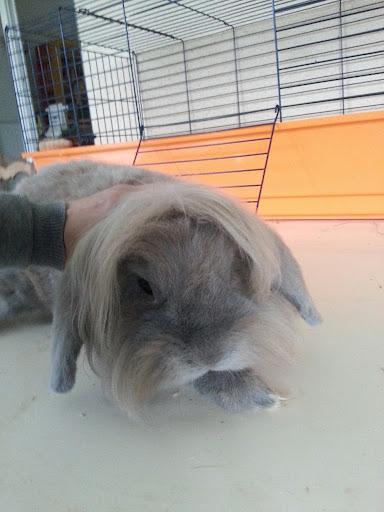 DIESEL - 6 ans - Lapin bélier + tête de lion couleur gris/beige 20121010