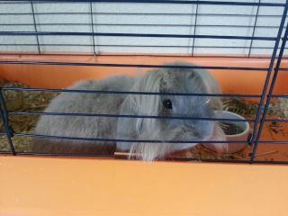 DIESEL - 6 ans - Lapin bélier + tête de lion couleur gris/beige 20121012
