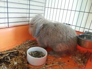 DIESEL - 6 ans - Lapin bélier + tête de lion couleur gris/beige 20121014