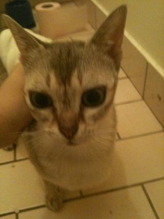 Recherche FA pour 4 chats adultes!!! Tess_111