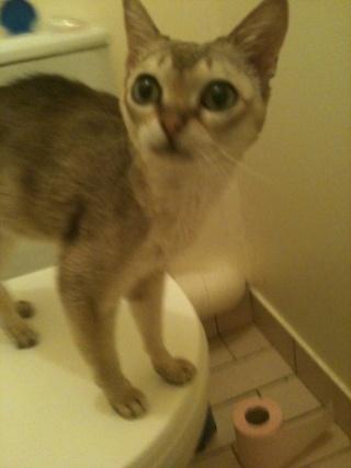 Recherche FA pour 4 chats adultes!!! Theo11