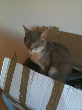 Recherche FA pour 4 chats adultes!!! Tyrex_11