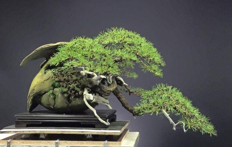 my new work - atelier bonsai Element - Page 10 Sniimk10