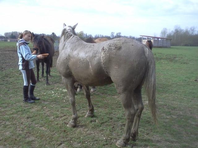 Le cheval et la boue : venez voter !! Dako_c10