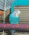 Mes 4 plumeaux... - Page 2 100_2416