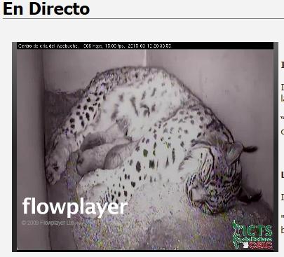Iberian lynx cam Lince_14