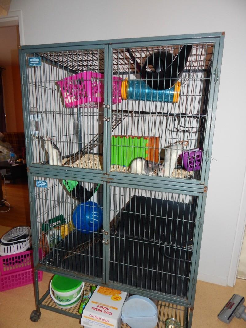 Photos de vos cages - Page 3 Dscn0416