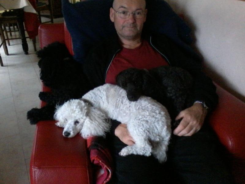 Ma petite famille canine  P04-1010