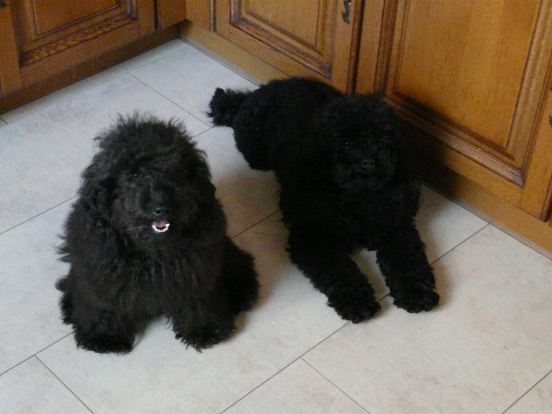 Ma petite famille canine  P1050010