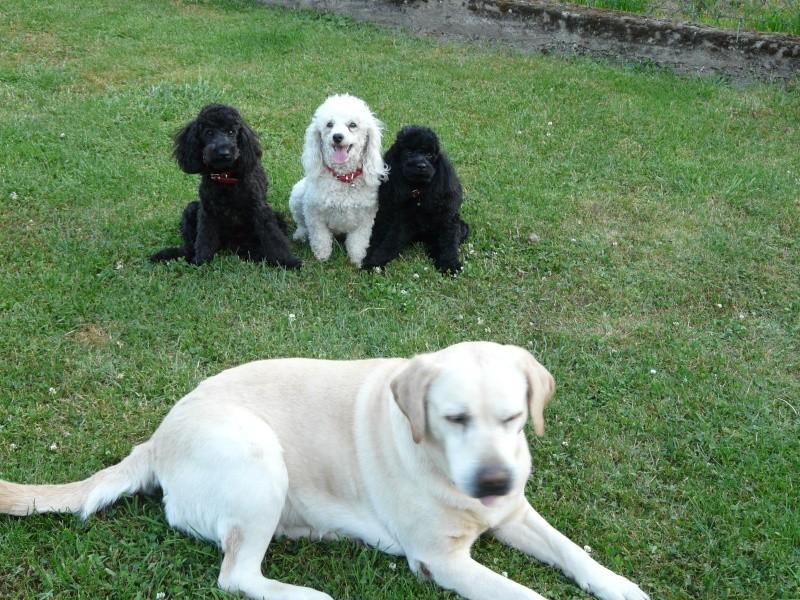 Ma petite famille canine  P1050110
