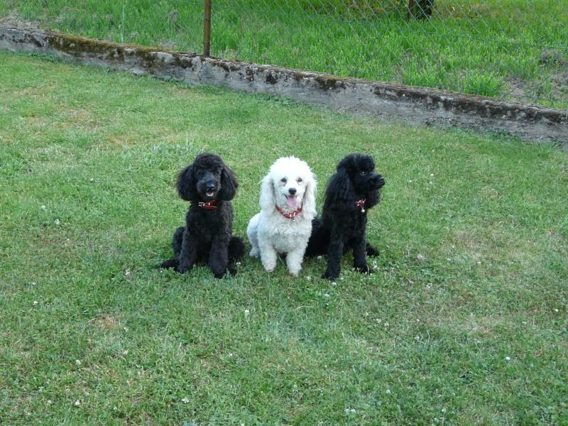 Ma petite famille canine  P1050111