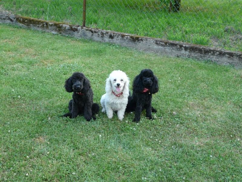 Ma petite famille canine  P1050112