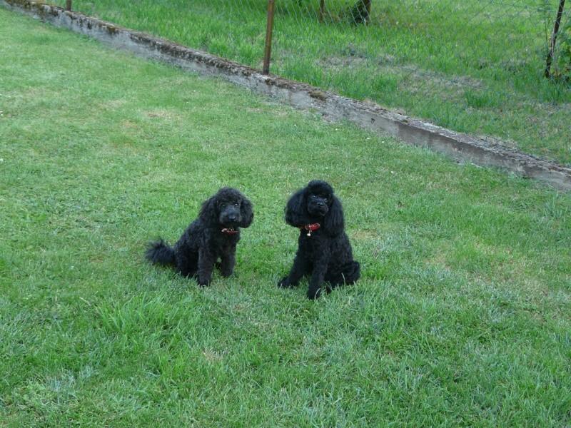 Ma petite famille canine  P1050113