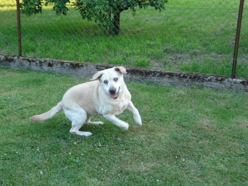 Ma petite famille canine  P1050114