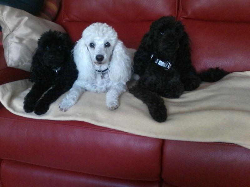 Ma petite famille canine  P30-0912