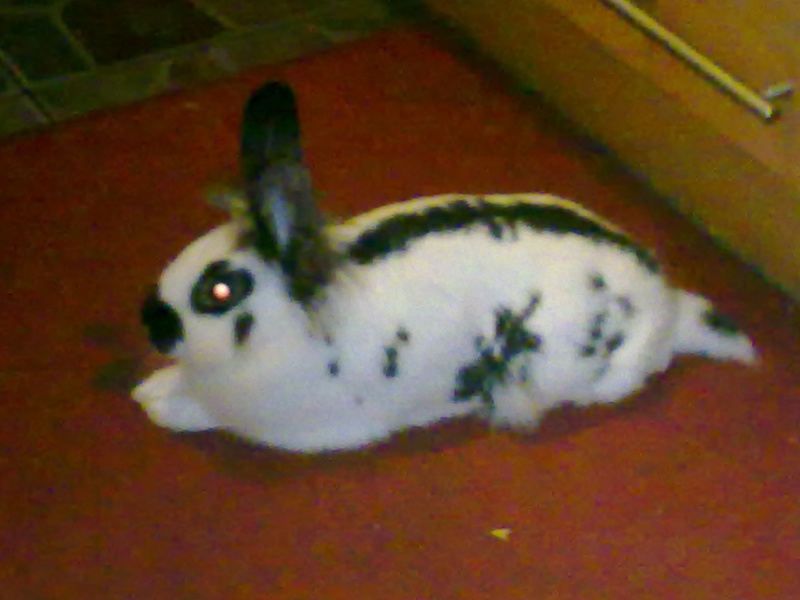 Got a rabbit from pets at home adoption. 31-07-10