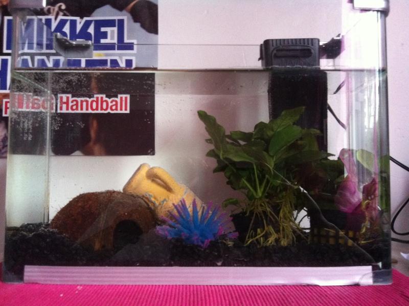 Nettoyage de l'aquarium Image-13
