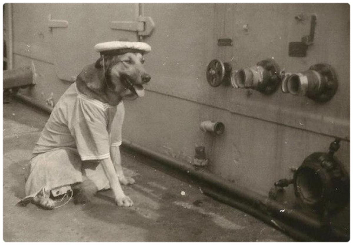 [ Les traditions dans la Marine ] LES MASCOTTES DANS LES UNITÉS DE LA MARINE - Page 18 1367