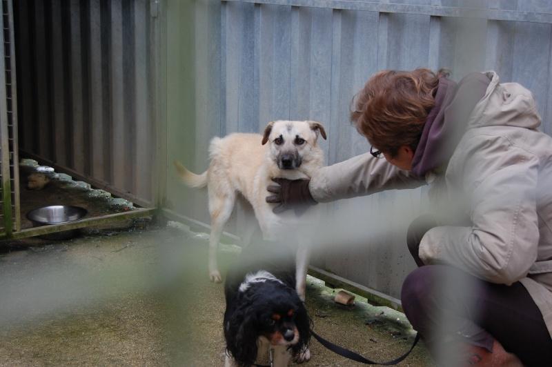 (Re)donner confiance à une chienne terrorisée - Page 6 2015-011