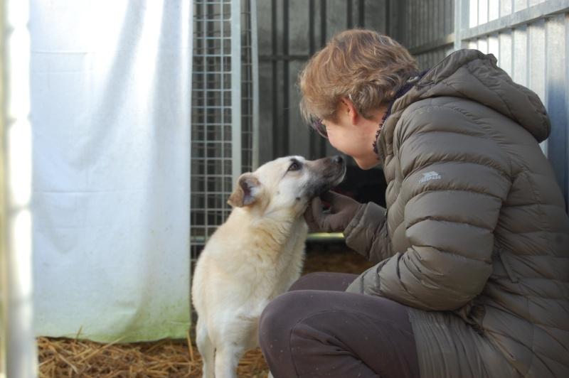 (Re)donner confiance à une chienne terrorisée - Page 7 2015-012