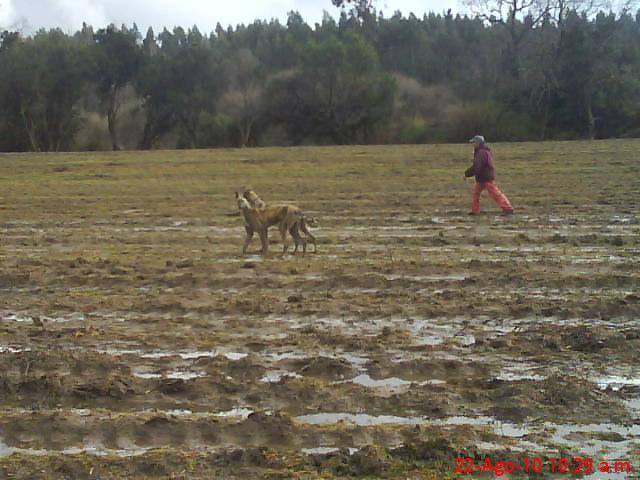 TEMPORADA DE CAZA NUEVA IMPERIAL 2010 Dsc00914