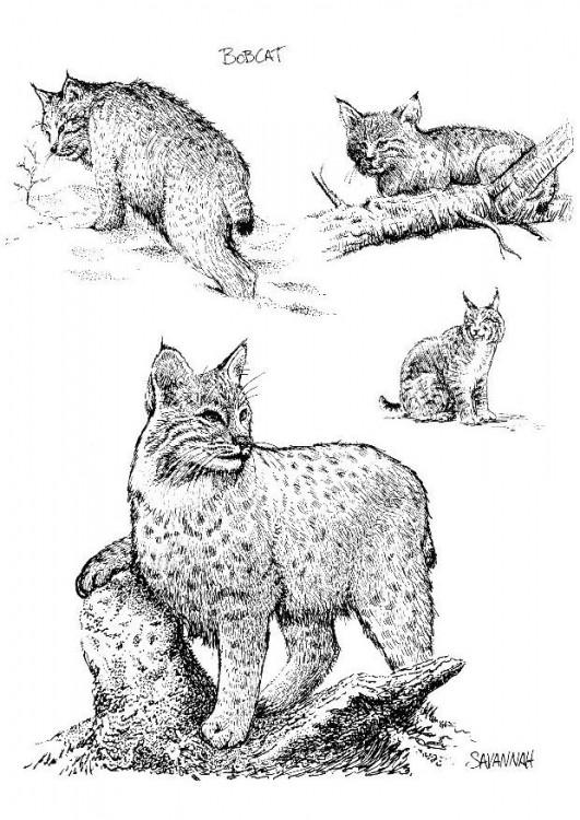 tee-shirt de patrouilles - Page 4 Lynx-t11