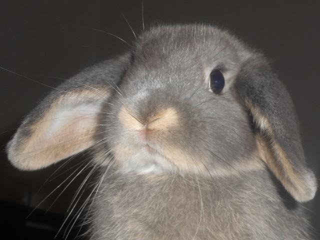 Cohabitation Euclide et future lapine  Rscn0910