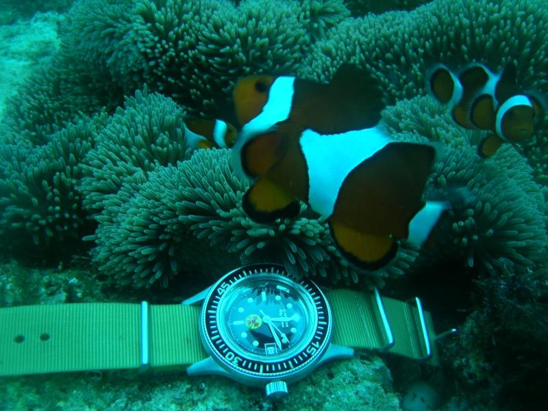 Ma dernière plongeuse. Dscn6410