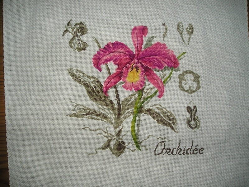 Galerie Anemso - Page 2 Orchid10
