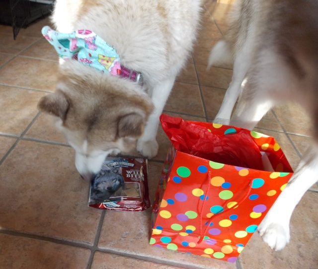Sierra's 12th Birthday! 3-1-2015 Dscn1321