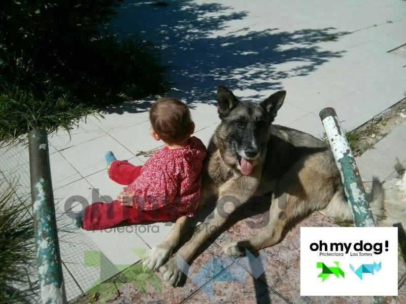 sauvetage en cours, Lena, chienne malade trouvée au bord de la route, Murcia Espagne. janvier 2015. - Page 2 11025810