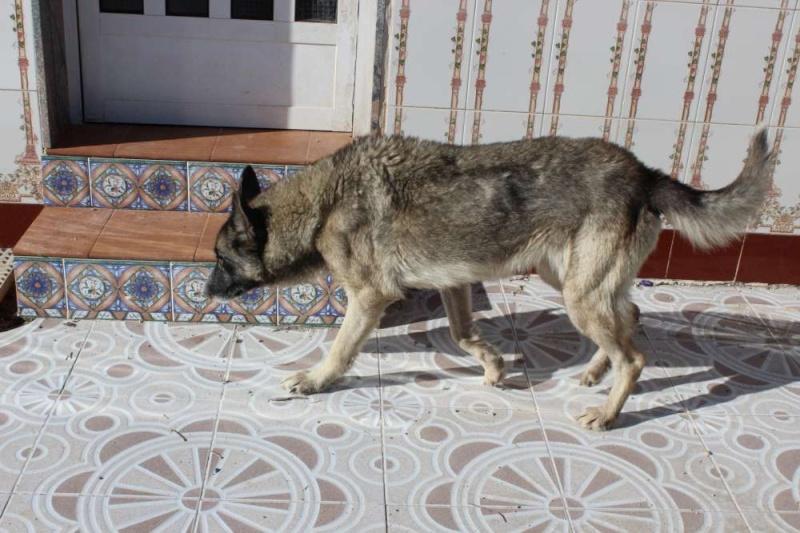 sauvetage en cours, Lena, chienne malade trouvée au bord de la route, Murcia Espagne. janvier 2015. Img_1111