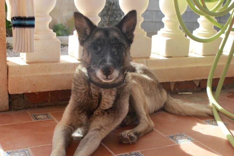 sauvetage en cours, Lena, chienne malade trouvée au bord de la route, Murcia Espagne. janvier 2015. Img_1115