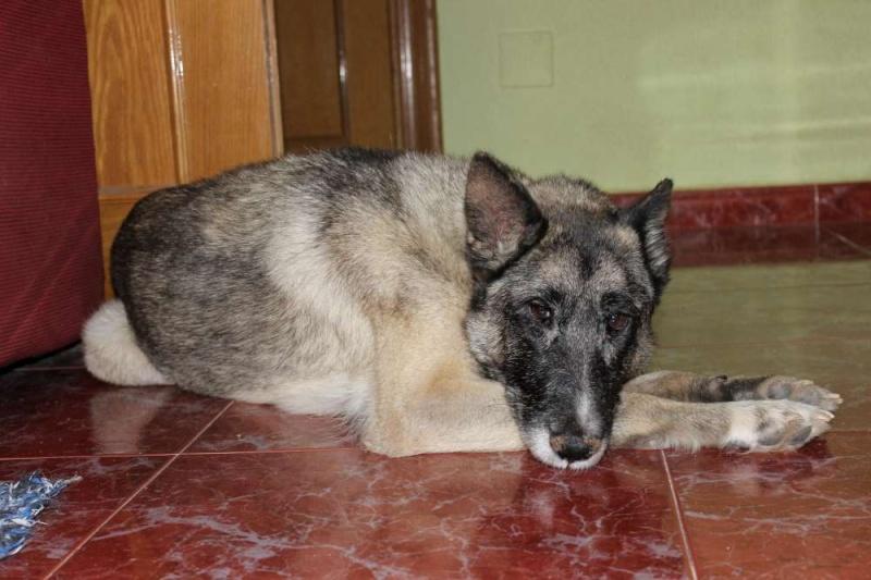 sauvetage en cours, Lena, chienne malade trouvée au bord de la route, Murcia Espagne. janvier 2015. Img_1211