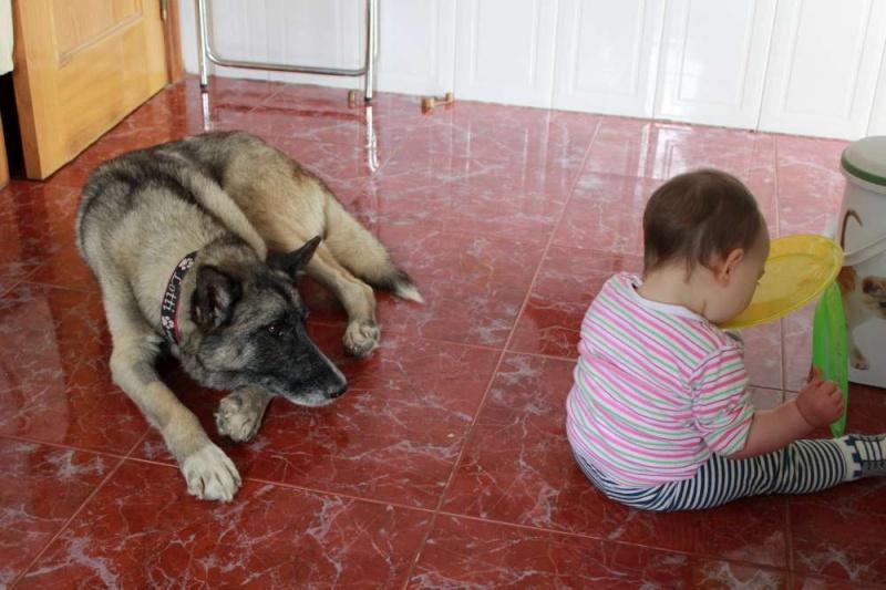 sauvetage en cours, Lena, chienne malade trouvée au bord de la route, Murcia Espagne. janvier 2015. Img_1410