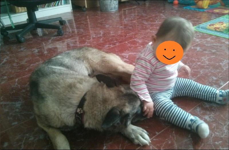 sauvetage en cours, Lena, chienne malade trouvée au bord de la route, Murcia Espagne. janvier 2015. Rps20113