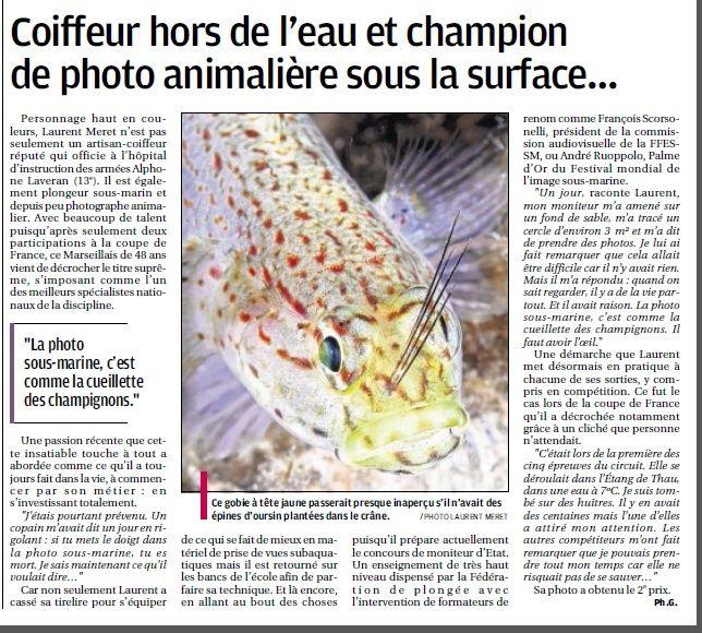 LA FAUNE ANIMALE MEDITERRANEENNE - Page 12 4112