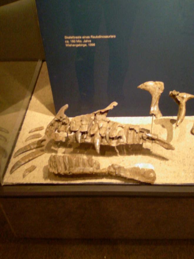 Dinosaurier aus Deutschland Photo-11