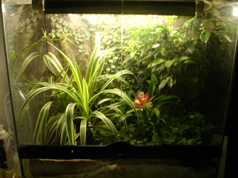 "Terrarium 60x45x60 ""A little piece of dream"" Terra_10"