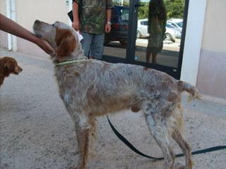 Sos-Décharge vous lance un appel désespéré (association pour les chiens de Corse) S5003144