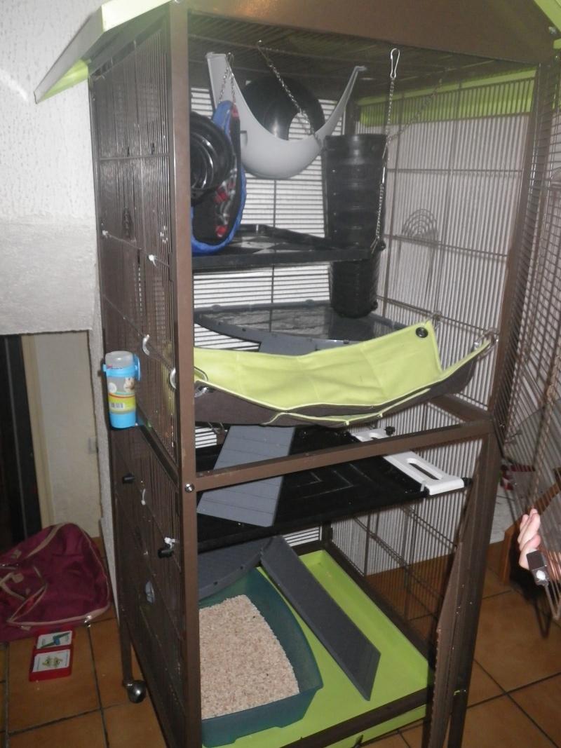 Photos de vos cages - Page 3 Imgp1010