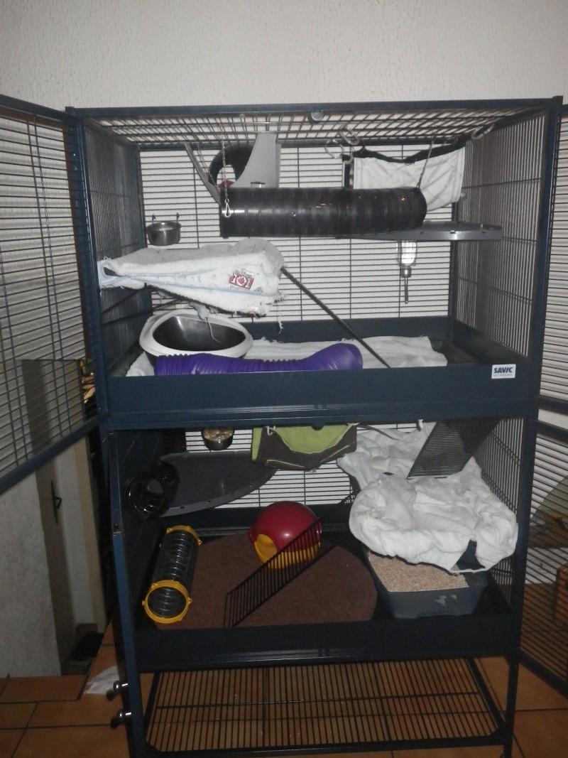 Photos de vos cages - Page 3 Imgp1110