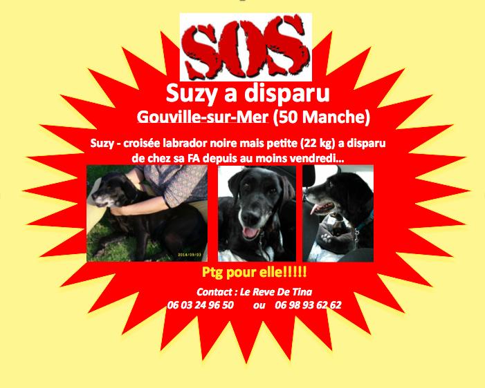 Suzy, petite croisée labrador noire de 14 ans - Page 2 Captur10