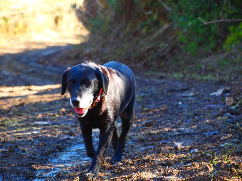Suzy, petite croisée labrador noire de 14 ans - Page 4 P2181411