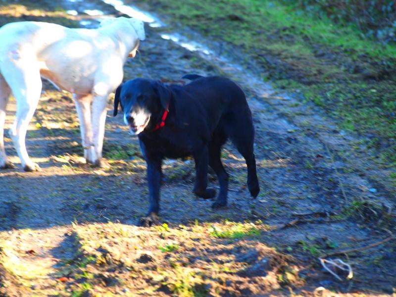 Suzy, petite croisée labrador noire de 14 ans - Page 4 P2181412