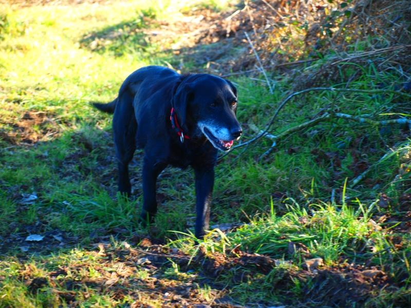 Suzy, petite croisée labrador noire de 14 ans - Page 4 P2181414