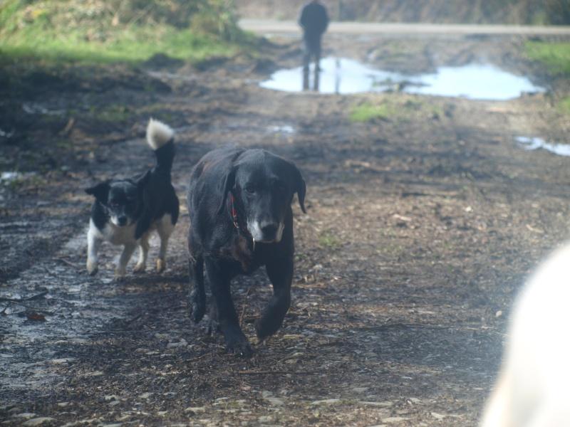 Suzy, petite croisée labrador noire de 14 ans - Page 4 P3031510