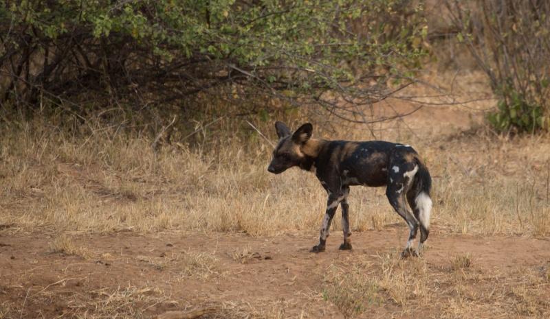 Northern Kenya safari - January 2015 - Page 2 Kt8h0922